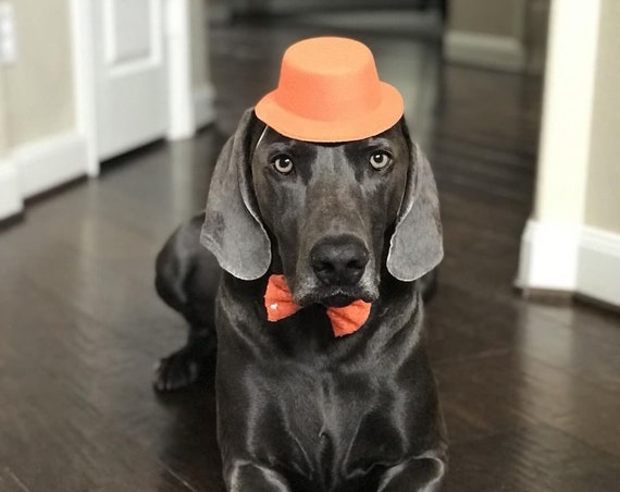 Dog Birthday Hat   Dog Costume   Pet Birthday    Top Hat    Animal Hat   Grey Felt Hat for Dogs    Dog Outfit   Dog Gift