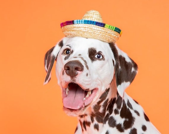 Mini Dog Sombrero || Mini Sombrero || Dog Hat || Straw Hat || Mini Sombrero ||  Fiesta Party || Fiesta Hat