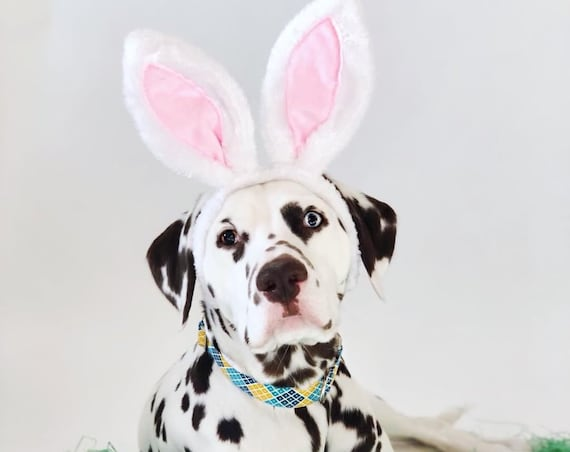 Bunny Ears for Dogs || Rabbit Ears || Bunny Costume for Dogs || Animal Rabbit Ears