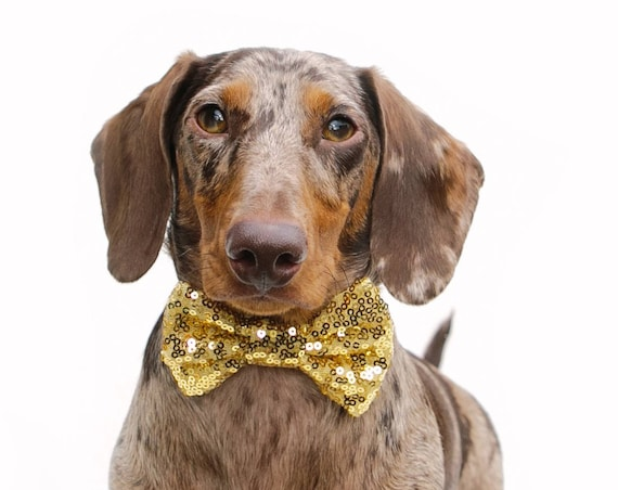 Bowtie For Dog  || Cat Neck Tie || Bowtie for Kitty || Pet Bow Tie || Cat Costume