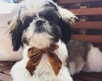 Lhasa Apso Tie Mens Dog Breed Neck Tie