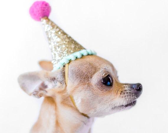 Dog Birthday    Dog Costume    Dog Birthday Hat    Dog Party Hat    Dog Birthday Party    Dog Clothes    Dog Crown
