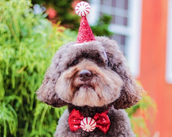 Peppermint Hat || Christmas Hat and Bow Tie || Peppermint Dog Christmas Outfit Costume || Animal Pet Holiday Outfit