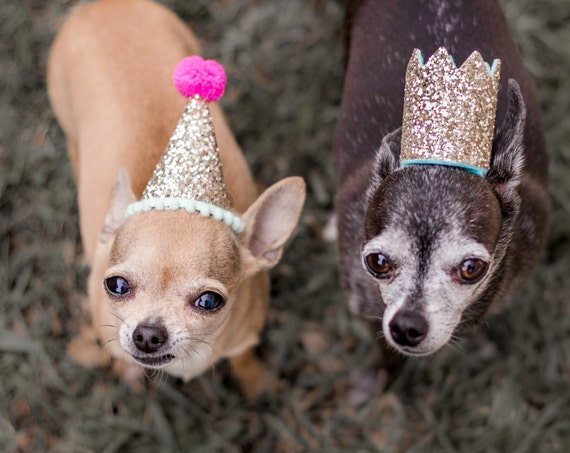 Dog Birthday || Dog Party Hat  Pet Party Crown Animal Hat Dog Crown Busters Party Shop