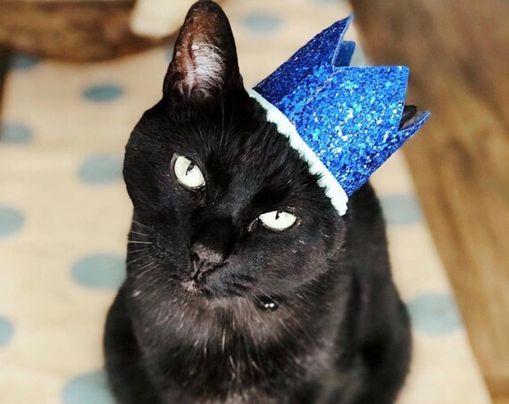 Cat Hat    Cat Costume    Pet Party Hat    Cat Kitty Puppy Pig Birthday Crown Hat    Dog Gift    Pet Clothing    Dog Tag