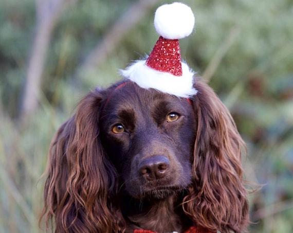 Christmas Dog Hat || Dog Costume || Santa Paws || Santa Hat for Pets