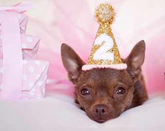 Dog Birthday Hat || Dog Party Hat || Dog Birthday Party Outfit || Animal Birthday Hat || Pet Birthday Hat || Dog Clothes
