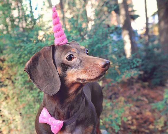 Unicorn Headband for Dog    Pet Unicorn Costume    Dog Unicorn    Unicorn Dog
