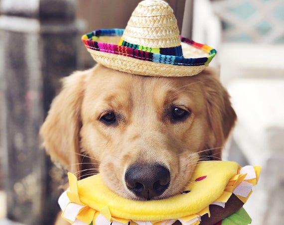 Mini Sombrero || Dog Hat || Straw Hat || Mini Sombrero ||  Fiesta Party || Fiesta Hat