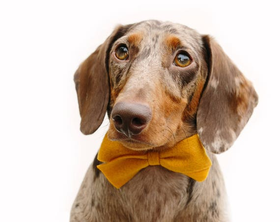 Felt Bow || Dog Bow Tie || Dog Headband || Felt Bow || Doggie Dress Up