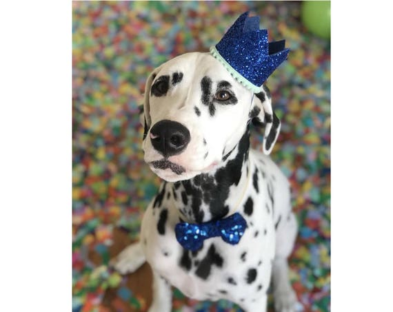 Dog Birthday Party || Dog Birthday Crown || Dog Costume || Pet Party || Dalmation ||  Pet Birthday || Pet Gift