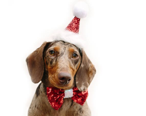Santa Hat and Bow Tie || Dog Christmas Outfit Costume || Animal Pet Holiday Outfit