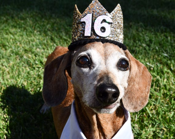 Dog Birthday Crown Hat || Animal Party Hat || Cat Kitty Puppy Pig Birthday Crown Hat || Add Any Number