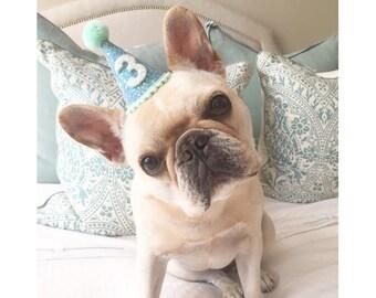 b546a7d7bc1 Pug birthday hat