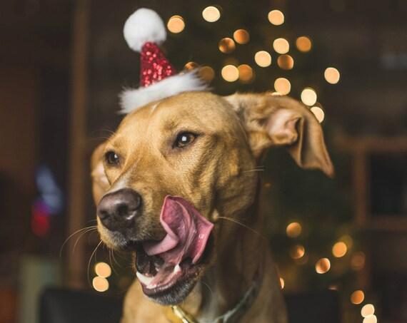 Dog Santa Hat Cat Santa Hat Christmas Pup Dog Costume