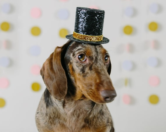 Dog Top Hat || Dog Gift || Pet Birthday Party Outfit || Pet Puppy Cat Kitten || Kitty Pig Birthday Crown |