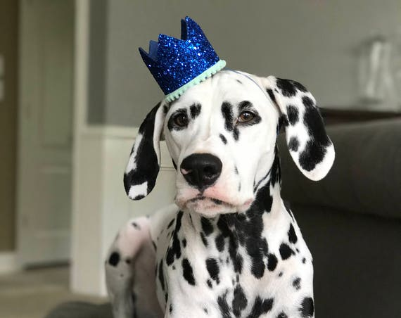 Dog Birthday Hat || Dog Birthday Party || Dog Birthday Crown || Dog Costume || Pet Party || Dalmation