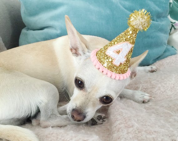 Dog Costumes || Birthday Hat || Dog Party Hat || Dog Birthday Party Outfit || Animal Birthday Hat || Pet Birthday Hat || Dog Clothes