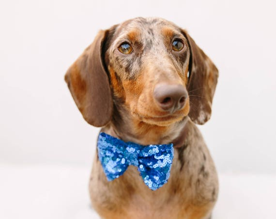 Dog Bow Tie || Dog Costume || Cat Neck Tie || Bowtie for Kitty || Pet Bow Tie || Cat Costume