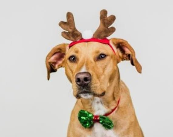 Reindeer Costume For Dogs  || Dog Reindeer  || Christmas Hat for  Dogs || Animal Hat || Dog hat || Holiday Accessory