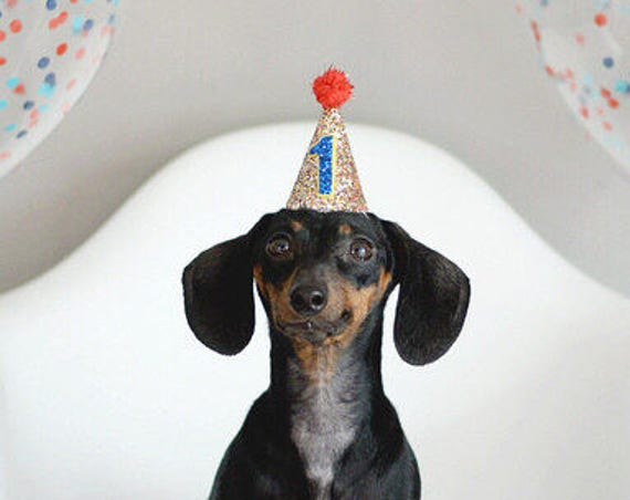 Dog Birthday Hat  || Dog Lover Gift || Dog Clothes || Dog Tag || Circus Party Hat