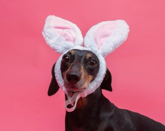 Dog Bunny Costume || Dog Bunny Ears || Animal Rabbit Ears || Bunny Ears for Dogs || Rabbit Ears || Bunny Costume for Dogs ||