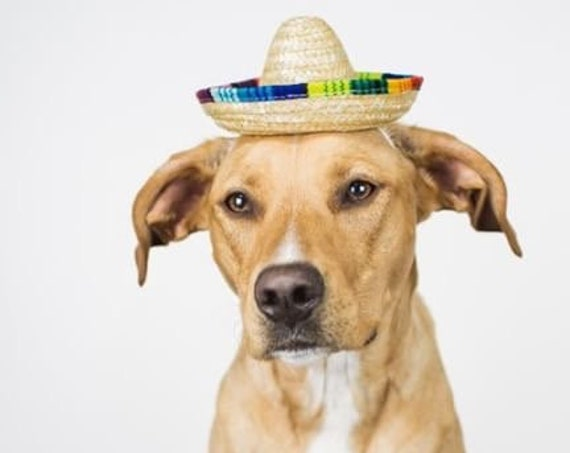 Dog Sombrero || Mini Sombrero || Dog Hat || Straw Hat || Mini Sombrero ||  Fiesta Party || Fiesta Hat