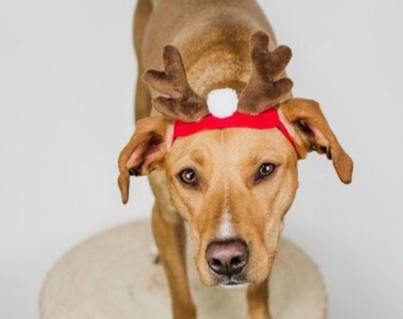 Reindeer Antlers for Dogs  || Dog Reindeer  || Christmas Hat for  Dogs || Animal Hat || Dog hat || Holiday Accessory