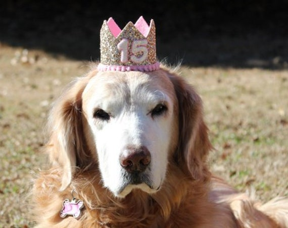 Birthday Crown Hat || Dog Birthday Hat || Pet Party Hat || Cat Kitty Puppy Pig