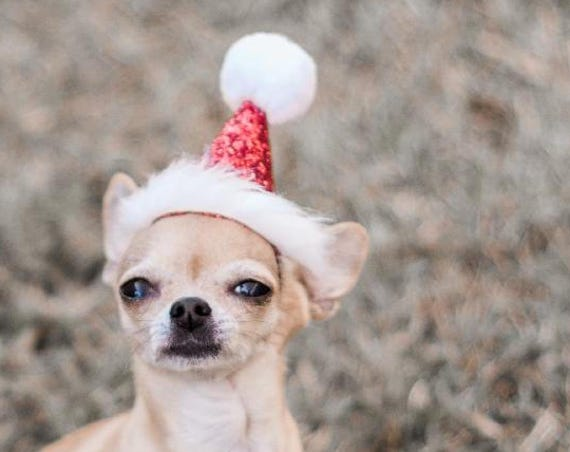 Christmas Hat for Dogs || Santa Hat for Dog || Santa Hat || Pet Santa Hat || Pet Christmas Gift