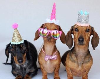 Hund Geburtstag Hund Kostum Hund Geburtstag Hut Hund Etsy