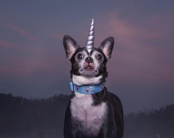 Mini Unicorn Headband for Dog || Pet Unicorn Costume || Dog Unicorn || Unicorn Dog
