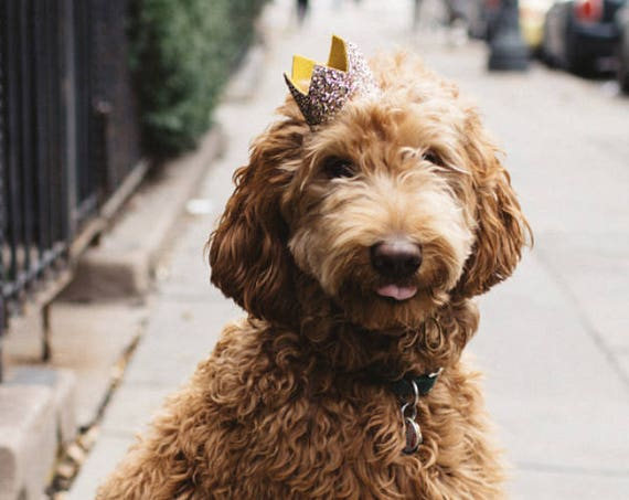 Birthday Hat    Dog Birthday Hat    Cat Kitty Puppy Pig Birthday Hat     Pet Birthday Crown    Dog Clothes