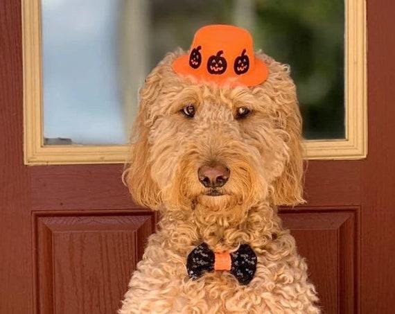 Pumpkin Halloween Costume for Dogs || Halloween Top Hat || Halloween Costume for Dogs || Busters Party Shop