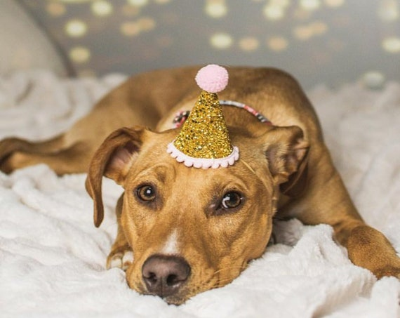 Birthday Party Hat Dog || Animal Party Hat || Pet Accessory || Bunny Costume