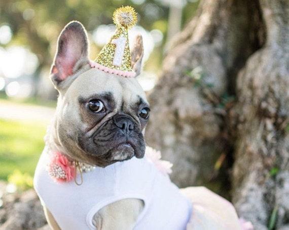 Pet Party Decor    Dog Birthday Hat    Dog Birthday    Dog Party Hat    Pet Cat Kitty Puppy Birthday Party Hat    Dog Clothes    Dog Costume