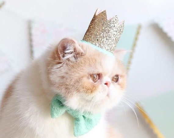 Cat   Birthday Hat + Bow Tie || Animal Party Hat || Cat Kitty Puppy Pig Birthday Crown Hat || Add Any Number