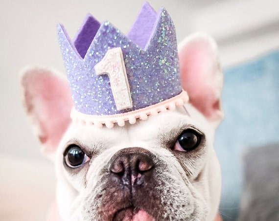 Dog Birthday  || Animal Party Hat || Pet Clothes || Cat Kitty Puppy Pig Birthday Crown Hat || Add Any Number