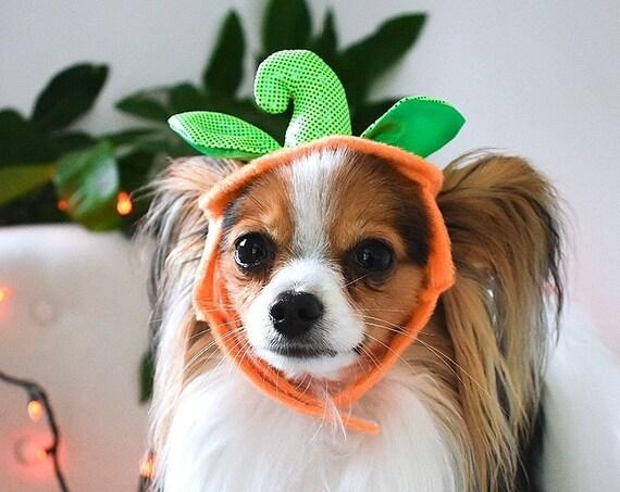Pumpkin Dog Costume Hat || Cat Pumpkin Hat Headband || Dog Halloween Costume || Halloween Puppy