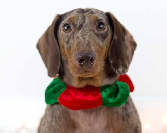 Elf Costume || Christmas  Elf || Christmas  Clothes for  Dogs || Cat Elf Costume ||  Busters Party Shop  || Holiday Accessory