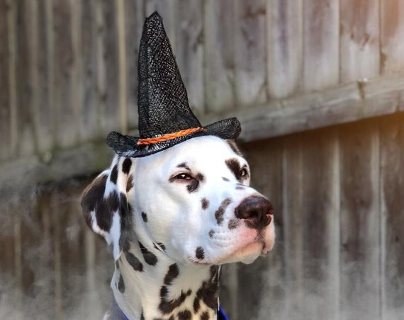 Dog Witch Hat || Animal Witch Wizard Hat || Dog Witch Costume || Dog Halloween Costume