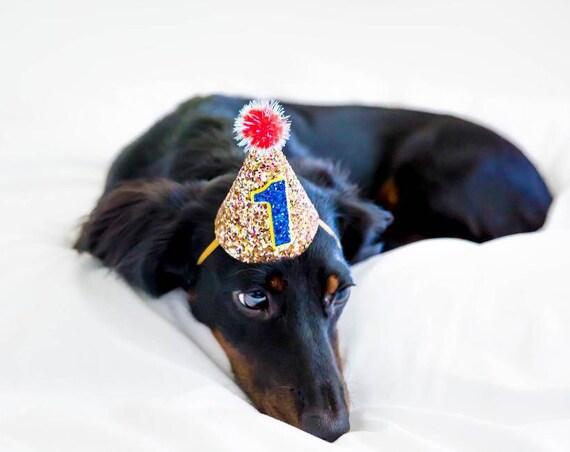 Dog Lover Gift || Dog Clothes || Dog Birthday || Dog Hat || Dog Party
