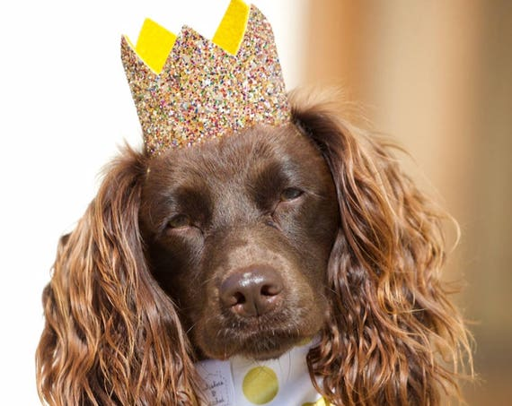 Pet Birthday Hat    Dog Birthday Hat    Cat Kitty Puppy Pig Birthday Hat     Pet Birthday Crown    Dog Clothes