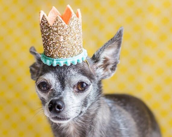 Mini Birthday Crown || Animal Birthday Hat || Dog Hat || Dog Crown || Dog Birthday Crown || Dog Birthday Hat || Pet Birthday