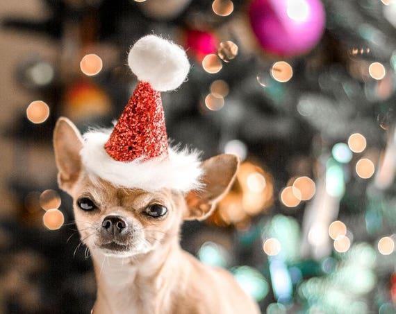 Santa Hat Dog Santa Hat Cat Santa Hat Christmas Photo Prop