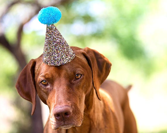 Dog Party Hat || Large Party Hat || Dog Cat Goat Birthday || Busters Party Shop || Dog Collar || Dog Costume