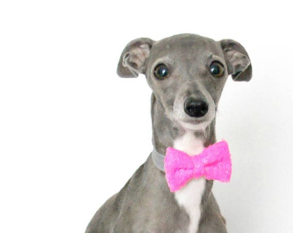 Dog Bow Tie Bowtie || Cat Neck Tie || Bowtie for Kitty || Pet Bow Tie || Cat Costume
