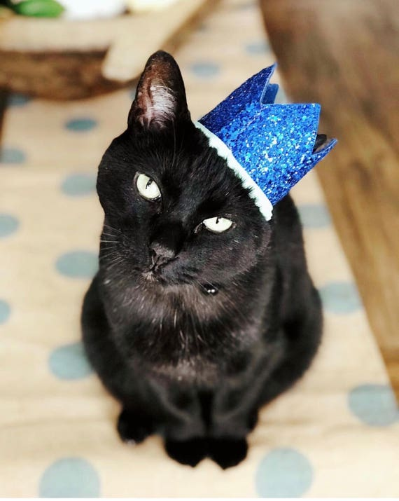 Cat Hat || Cat Costume || Pet Party Hat || Cat Kitty Puppy Pig Birthday Crown Hat || Dog Gift || Pet Clothing || Dog Tag