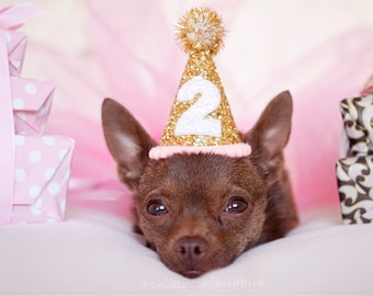 Dog Birthday Party Outfit || Animal Birthday Hat || Pet Birthday Hat || Dog Clothes || Dog Birthday Hat || Dog Costume