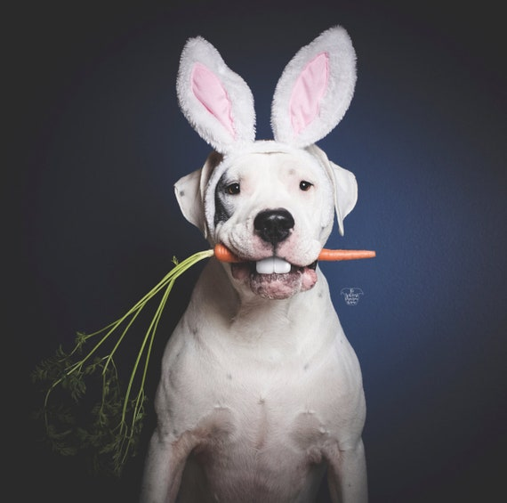 Animal Rabbit Ears || Bunny Ears for Dogs || Rabbit Ears || Bunny Costume for Dogs ||